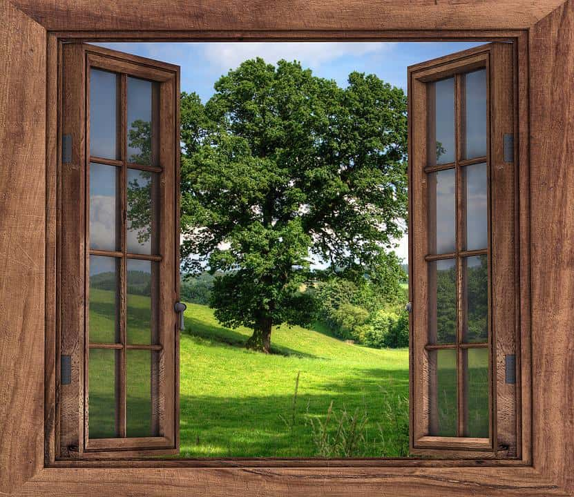 An open window displaying a beautiful green tree and green grass.